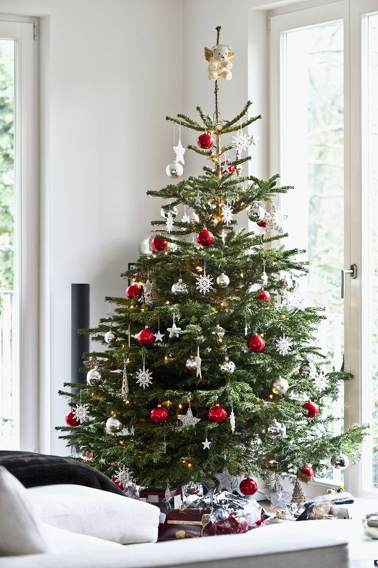 How to Care for Your Christmas Tree - Bees and Roses  Christmas Tree, Christmas Tree Care, Gardening, Plant Care Hacks, Christmas Tree DIY, Live Christmas Tree #Christmas #ChristmasTreeCare