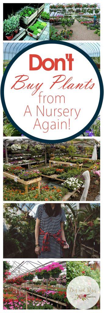 Buy Plants Cheap, Buy Plants Online, Gardening, Garden Ideas, Gardening Ideas, Gardening Tips, Gardening Tricks