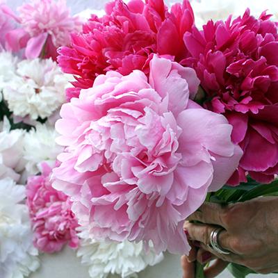 Growing Peonies, Peonies, Flower Garden, Flower Garden Ideas, garden Ideas, Gardening Ideas