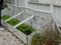 6 Tips for Successful Cold Frame Gardening| Cold Frame Gardening, Cold Frame Gardening TIps, Gardening TIps and Tricks, Gardening Hacks, Winter Gardening Hacks, Cold Frame Gardening, Popular Pin #WinterGardening #Gardening