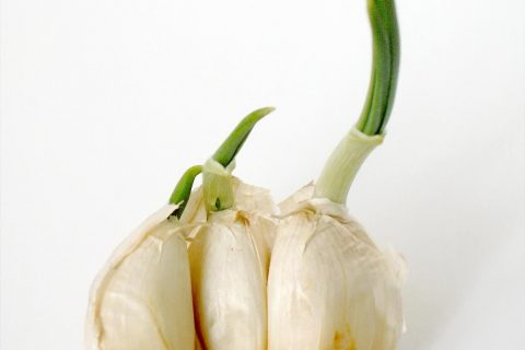 How to Propagate Garlic| Garlic. How to Grow Garlic, Gardening, Indoor Gardening, Propagate Garlic, How to Propagate Garlic, Gardening 101, Popular Pin #Garlic #Gardening