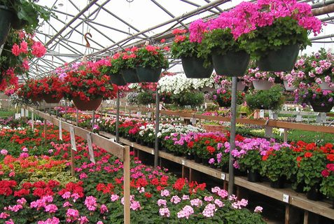 Don't Buy Plants from A Nursery Again! - Bees and Roses| Gardening, Gardening TIps and Tricks, Nursery, Nursery Tips and Tricks, Where to Buy Plants, Popular Pin #Gardening #GardeningHacks