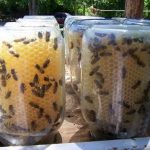 How to Make Your Own Beehive| DIY Beehive, How to Make Your Own Beehive, Garden, Garden Projects, Gardening Projects, Easy to Make Beehives, Popular Pin #Gardening #DIYBeehive #OutdoorDIYs