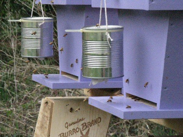 DIY Beehive, Beehive Building, DIY Beehive Decoration, DIY beehive Craft, Beehive Building Crafts