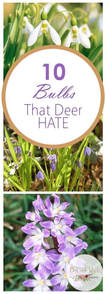 10 Bulbs That Deer HATE| Deer Resistant Bulbs, Gardening, Growing Bulbs, How to Grow Bulbs, Deer and Rabbit Resistant Plants, Pest Resistant Plants, Landscaping, Landscaping TIps and Tricks