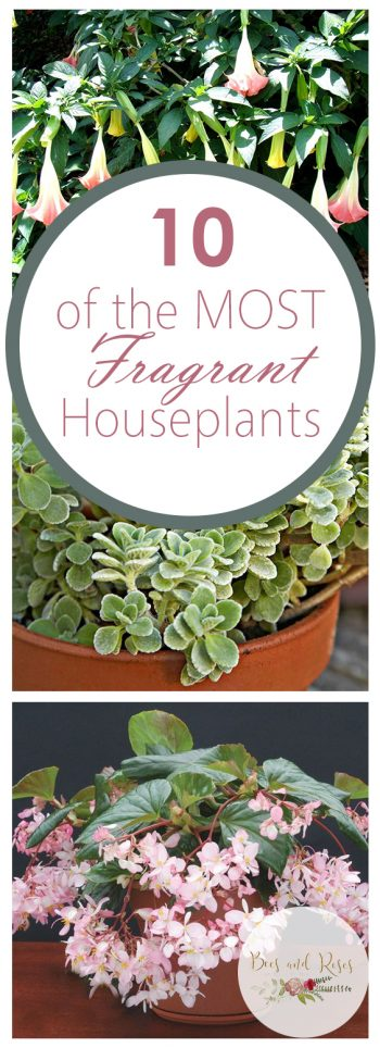 10 of the MOST Fragrant Houseplants| Houseplants, House Plant Decor, Houseplants Low Light, House Plants Indoor, Garden Ideas, Gardening, Garden, gardening for Beginners #GardenIdeas #Houseplants #HouseplantsHomeDecor