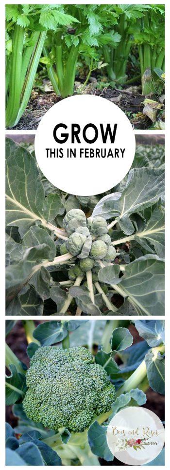 Grow This in February| February Gardening, Winter Gardening, Easy Winter Gardening, Garden In the Winter, What to Plant In February #WinterGardening #Gardening