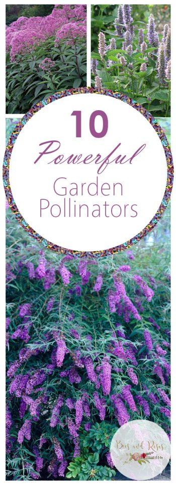 10 Powerful Garden Pollinators| Garden Ideas, Garden Pollinators, Pollinator Garden, Pollinator Garden Design, Flower Garden Ideas, Flower Gardening for Beginners, Gardening