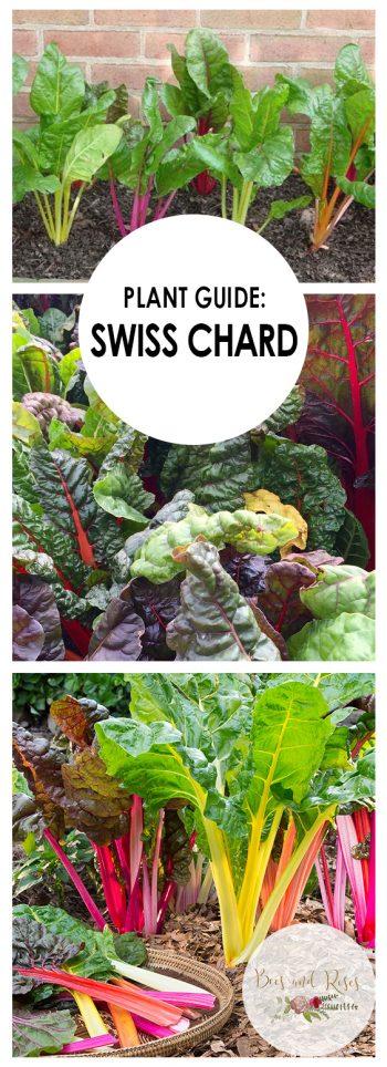 Growing Swiss Chard, Swiss Chard, Swiss Chard Growing, Gardening, Garden Ideas, Gardening Ideas, Gardening Tips,
