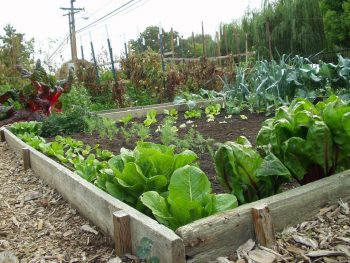 10 Vegetable Gardening Tips for Beginners| Vegetable Garden, Vegetable Gardening for Beginners, Gardening for Beginners, Gardening Tips for Beginners, Gardening, Gardening Ideas, Easy Gardening Ideas