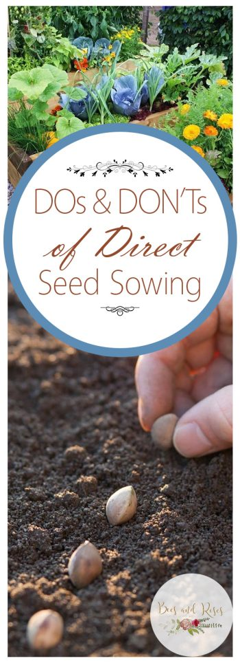 Dos and Donts of Direct Seed Sowing| Direct Sowing, Direct Seeding, Garden Ideas, Gardening Ideas, Seed Starting Seed Starting Indoors