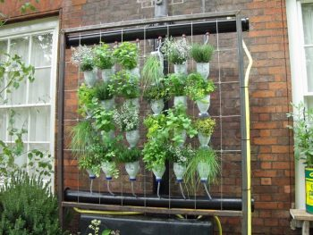 Hanging Garden Ideas | Hanging Garden Tips and Tricks | Ideas for a Hanging Garden | DIY Hanging Garden | DIY Hanging Garden Ideas | Garden | Tips and Tricks