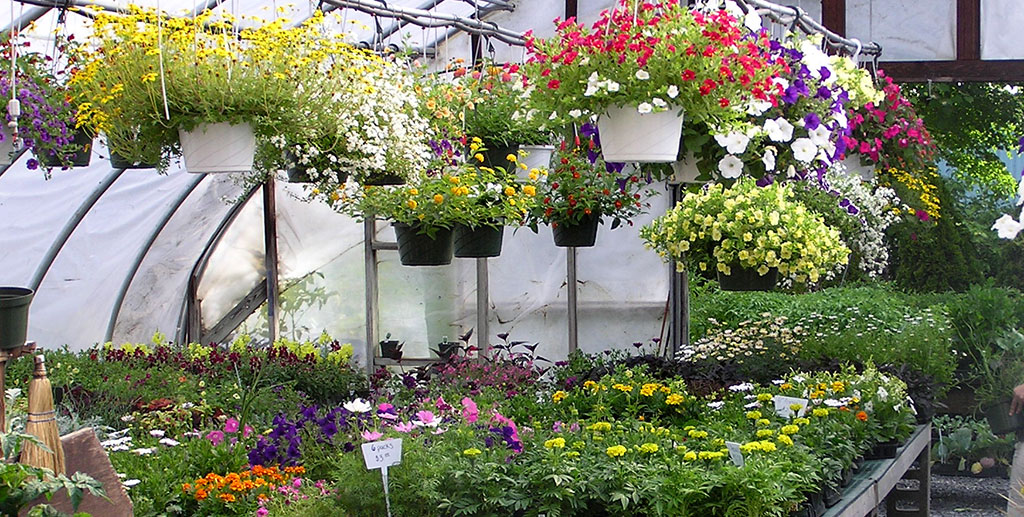 10 Gorgeous Hanging Garden Ideas Bees And Roses