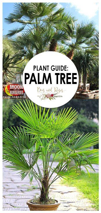Palm Tree | Growing Palm Tree | Tips and Tricks to Grow a Palm Tree | Plant Guide: Palm Tree | Palm Tree Care | Palm Tree Ideas