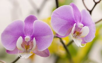 exotic plants-orchid