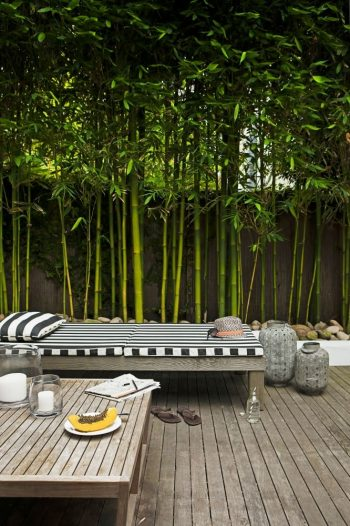 exotic plants-bamboo