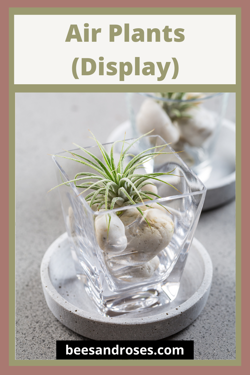 Air plants make great houseplants for those homeowners who tend to kill everything they look at. Why? Well, these plants require little maintenance and no soil. You read that right, no soil. Keep reading to learn more about the amazing houseplant. #airplants #houseplantcare #beesandrosesblog
