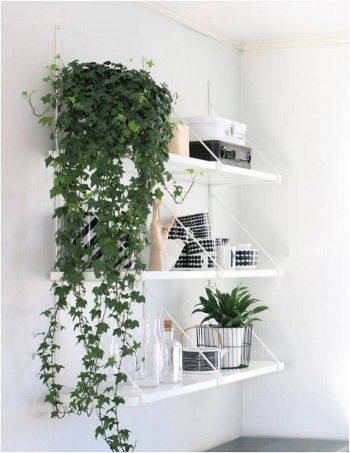 Low-Light Loving Indoor Plants - Bees and Roses | Low-Light Plants | Low-Light | How to Care for Low-Light Loving Plants | Garden | Plants
