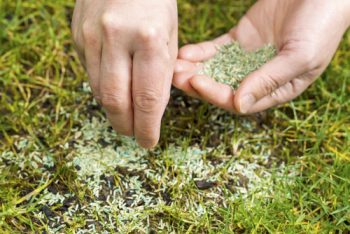 Stop Planting Grass Seed The Wrong Way   Planting Grass Seed   Tips and Tricks for Planting Grass Seed   Grass Seed   How to: Plant Your Own Grass Seed   Yard Care