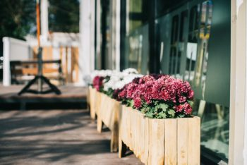 Flowering Pots Perfect for Your Patio | Flowering Pots | Patio Gardening | Potted Flowers | Gardens | Flowers