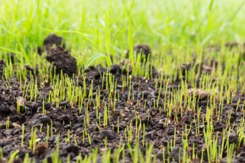 Stop Planting Grass Seed The Wrong Way | Planting Grass Seed | Tips and Tricks for Planting Grass Seed | Grass Seed | How to: Plant Your Own Grass Seed | Yard Care