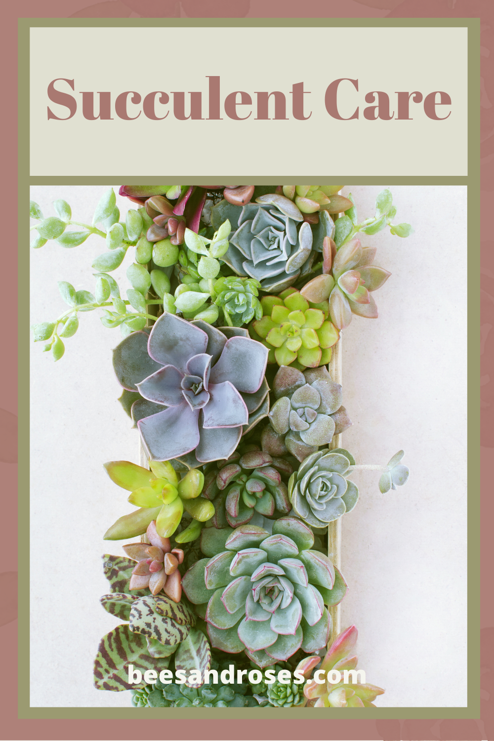 Whether indoor or outside, succulents need special care. Learn the dos and don'ts and how you can care for your succulents with ease. Read the post to learn succulent care tips. #beesandrosesblog #succulents #succulentcare