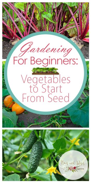 Gardening For Beginners   Tips and Tricks for Beginners   Beginner's Guide to Gardening   Vegetables to Start From Seed