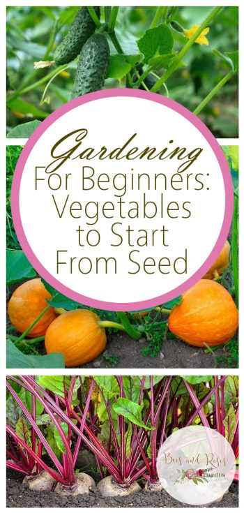 Vegetables to Start From Seed | Gardening for Beginners | How to Grow Vegetables from Seed | DIY Garden | Veggie Garden