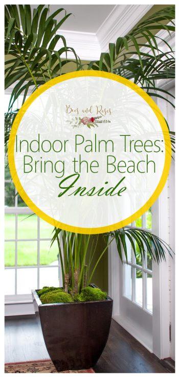 indoor palm trees, indoor plants, palm tree indoor plants, indoor palm tree plants