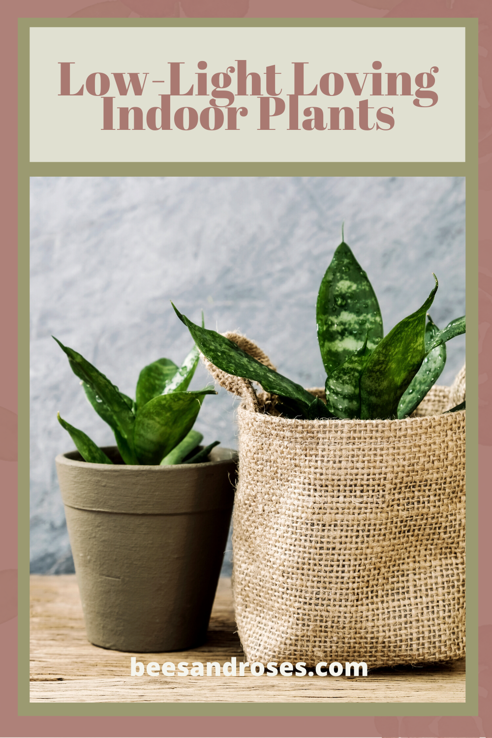 Most plants need lots of light. But, if you do not have a lot of windows or a garden room, there are still a lot of options for you. Read this post to learn about low light loving indoor plants. #lowlovingindoorplants #houseplants #beesandrosesblog