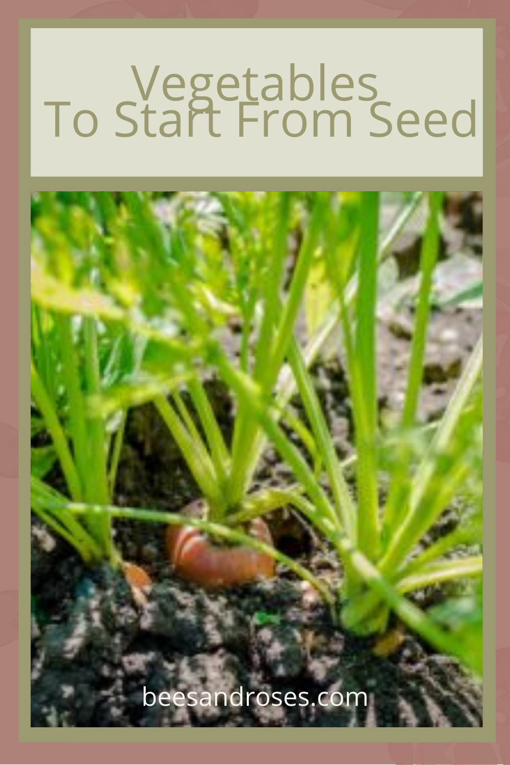 Gardening for beginners tips for Vegetables to start from seed. Learn about the vegetables that do well starting from seed. #gardeningtips #gardeningforbeginners#vegetables #Startingseeds #beesandrosesblog