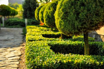 Landscaping Around Trees | DIY Landscapes Around Trees | How to Landscape Around Trees | Learn How to Landscape Around Trees | Trees | Landscaping | DIY Landscaping