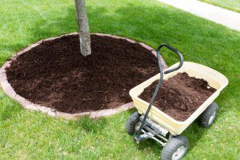Landscaping Around Trees | DIY Landscapes Around Trees | How to Landscape Around Trees | Learn How to Landscape Around Trees | Trees | Landscaping | DIY Landscaping