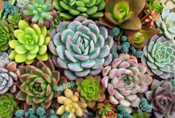 Succulent Care: The Dos and Don'ts | How to Care for Succulents | Succulent Care | Succulents | Garden | Plants