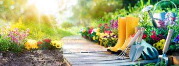 Vegetables to Start From Seed | Gardening for Beginners | How to Grow Vegetables from Seed | DIY Garden | Veggie Garden