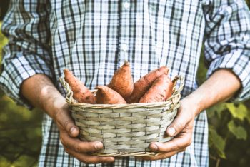 Potato Planter | Potato Planter Plan | How to Grow Potatoes | Potatoes Tips and Tricks | Garden | Gardening | Vegetable Garden