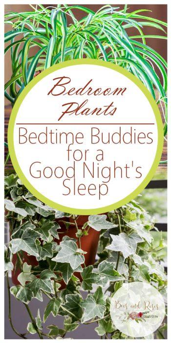 Bedroom Plants | Plants for Better Air | Plants for Better Health | Plants for the Bedroom | Plants for Better Sleep | Bedroom Plants Tips and Tricks