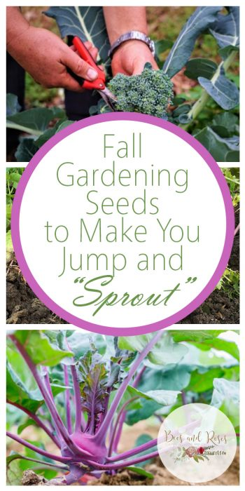 Fall Gardening Seeds | Fall Garden Seeds | Fall Garden | Fall Gardening | Tips and Tricks to Grow Veggies from Seed in the Fall | Vegetables From Seed