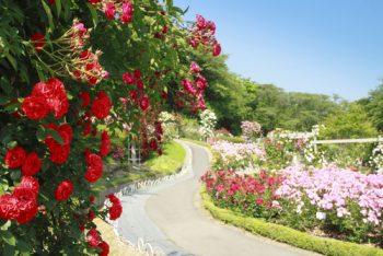 Romantic Garden | Romantic Garden Ideas | DIY Romantic Garden | Tips and Tricks for a Romantic Garden | Garden Guide | Garden Design | Romantic Garden Design
