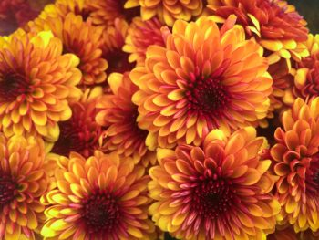 Fall Wreaths | Fall Flowers for Fall Wreaths | DIY Fall Wreaths | Wreaths | Fall Decorations | Fall Front Porch Decor | Fall Flowers
