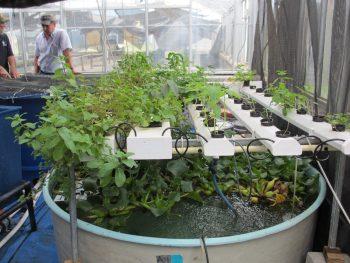 Aquaponic Gardening Guide | Aquaponic Gardening | Aquaponic Garden | Aquaponic Gardening Tips and Tricks | Aquaponic Gardening Hacks | Guide to Aquaponic Gardening