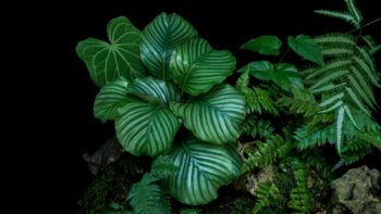 Prayer Plant | Tips and Tricks for Prayer Plant | Plant Guide: Prayer Plant | How to Care for Prayer Plant | Prayer Plant Care | Prayer Plant Ideas | Prayer Plant Tips and Tricks