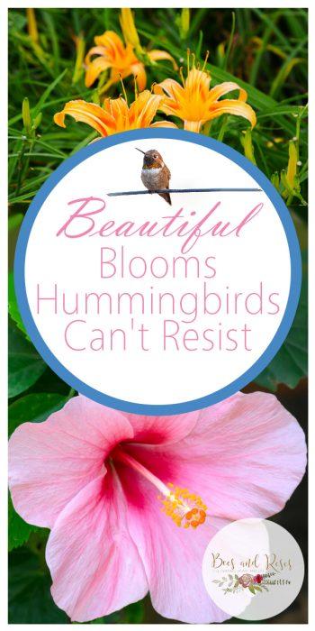 Hummingbirds | Hummingbird Flowers | Beautiful Blooms | Beautifully Blooming Flowers | Beautiful Blooms for Hummingbirds | Hummingbird Garden | Hummingbird Gardening