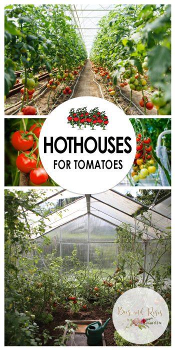Hothouses | Hothouse Growing | Growing Tomatoes In Hothouses | Houthouse Gardening | Hothouse Gardening Tips and Tricks | Hothouse Garden | Tomato Hothouse Garden
