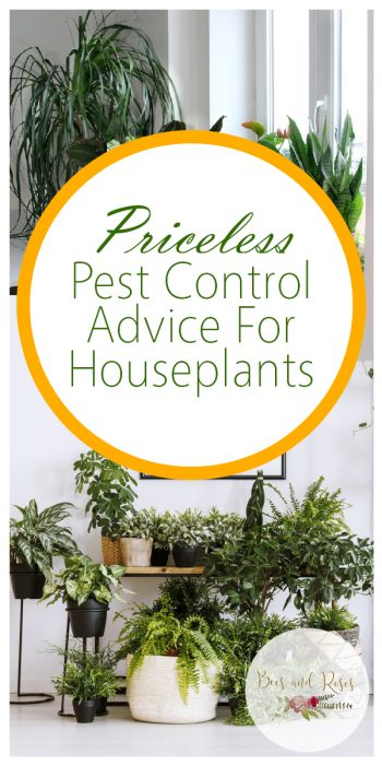 Pest Control | Pest Control Tips and Tricks | Pest Control Hacks | Houseplants | Houseplant Pest Control | Houseplant Pest Control Ideas