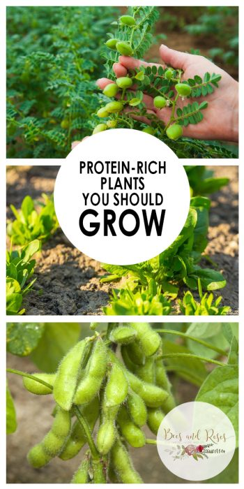 Protein-Rich Vegetables | Protein-Rich Vegetables | Tips and Tricks for Growing Vegetables | Vegetable Growing | Vegetable Gardening | Gardening