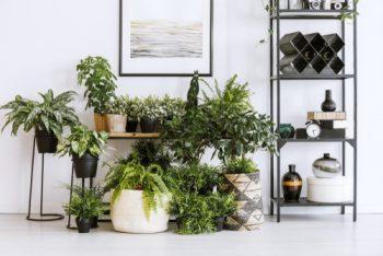Pest Control | Pest Control Tips and Tricks | Pest Control Hacks | Houseplants | Houseplant Pest Control | Houseplant Pest Control Ideas
