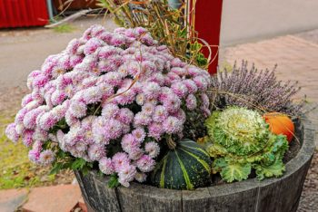 Fall Container Gardens | Fall Container Gardening | Container Gardening | Container Gardening Tips and Tricks | Fall Gardening | Fall Gardens | Gardening in the Fall