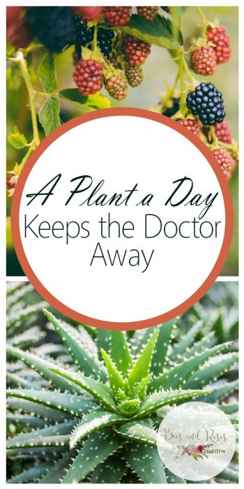 A Plant a Day | A Plant a Day Keeps the Doctor Away | Healthy Plants | Plants Tips and Tricks | Plant Guides | Plants | Best Plants