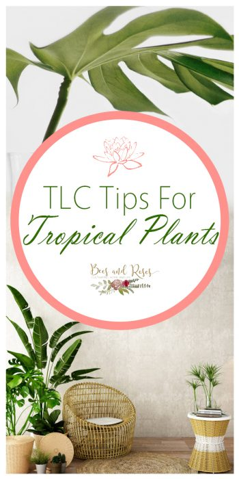 Tropical Plants | Tips and Tricks for Tropical Plants | Learn How to Care for Tropical Plants | Tropical Plant Hacks | Tropical Plant Tips and Tricks